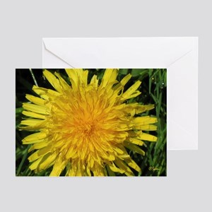 Dandylion Greeting Cards (Pk of 10)