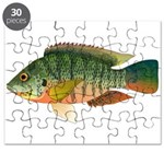 Redbreast tilapia Puzzle