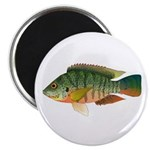 Redbreast tilapia Magnets
