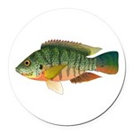 Redbreast tilapia Round Car Magnet