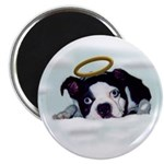 BOSTON TERRIER ANGEL LOOK Magnet