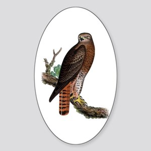 Red-tailed Hawk Oval Sticker