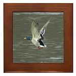 Flying Mallard Framed Tile
