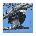 Eagle In the Wind Tile Coaster