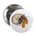 Hermit Crab Button