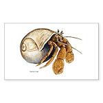 Hermit Crab Rectangle Sticker