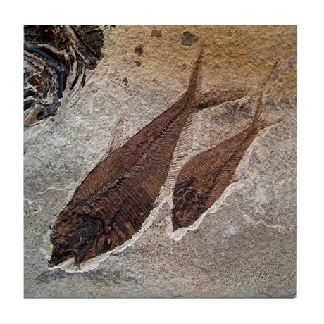 Fish Fossil Image Art Tile Ceramic Coaster