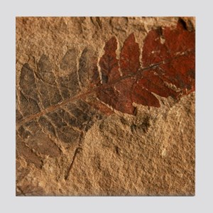 Fern Leaf Fossil Image Art Tile Coaster
