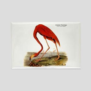 Audubon Flamingo Bird Rectangle Magnet