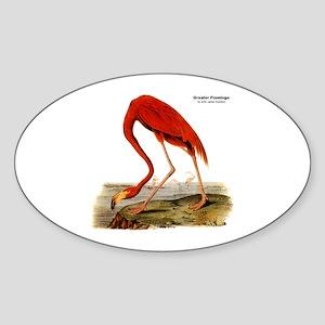 Audubon Flamingo Bird Oval Sticker