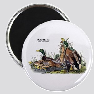 Audubon Mallard Ducks Magnet