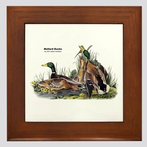 Audubon Mallard Ducks Framed Tile