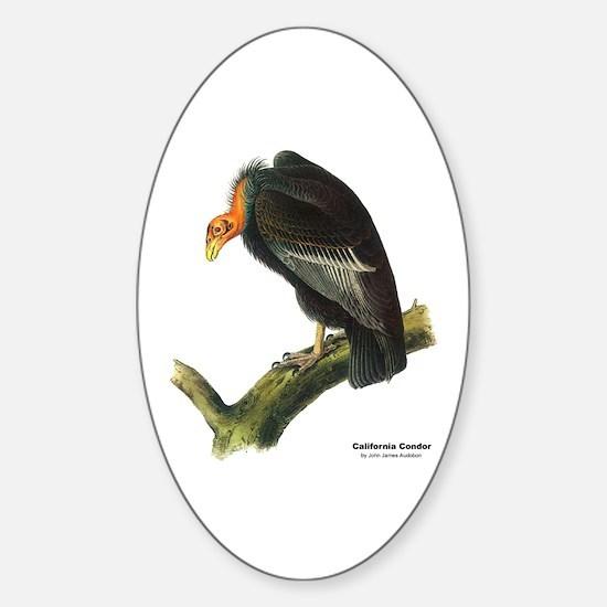 Audubon California Condor Bird Oval Decal