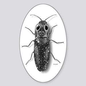 Eyed-Click Beetle Oval Sticker