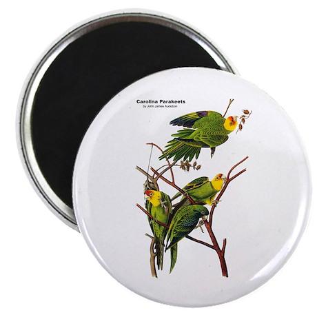 """Audubon Carolina Parakeet Birds 2.25"""" Magnet (10 p"""
