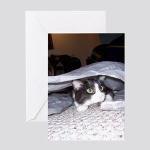 Spike is a curious kitty... Greeting Card