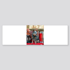show girl pic copy Bumper Sticker