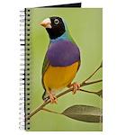 Gouldian in a Gum Tree Journal (BH)