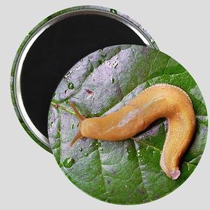 Banana Slug on Leaf Magnet