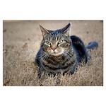 Bob Cat in Yard Poster