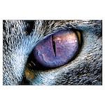 Kat Eye Poster