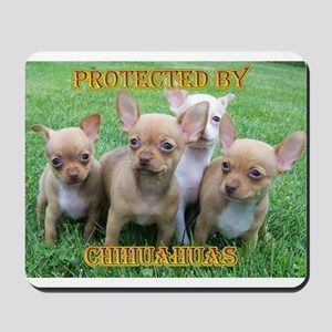 Protected by Chihuahuas Mousepad