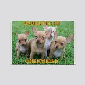 Protected by Chihuahuas Rectangle Magnet