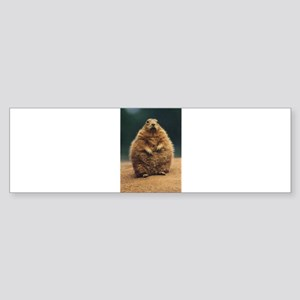 Prairie Dog Bumper Sticker