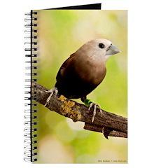 White Headed Munia Finch Journal