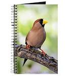 Masked Grass Finch Journal
