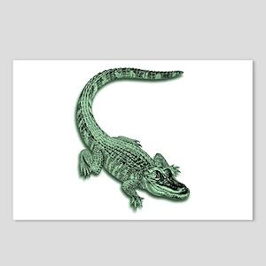 Florida Alligator Postcards (Package of 8)