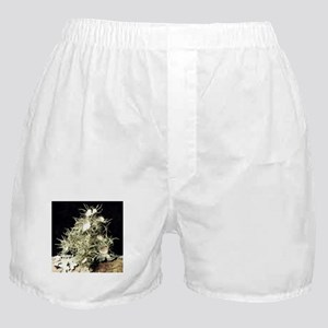 Lichen Tree Boxer Shorts