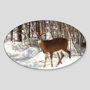 10 Point Buck Oval Sticker