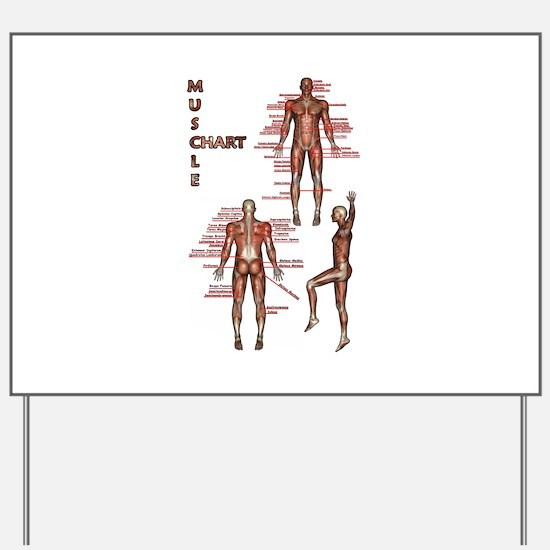 Muscle Chart Yard Sign
