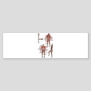 Muscle Chart Bumper Sticker
