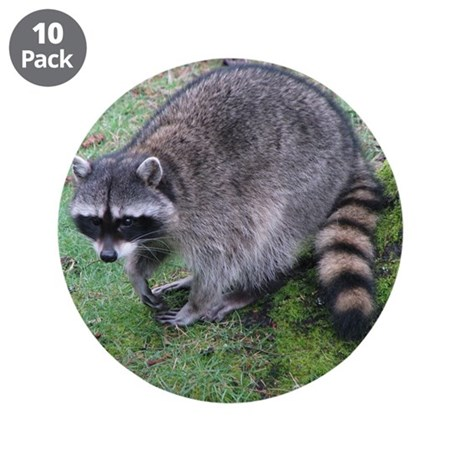 "Helaine's Raccoon 3.5"" Button (10 pack)"