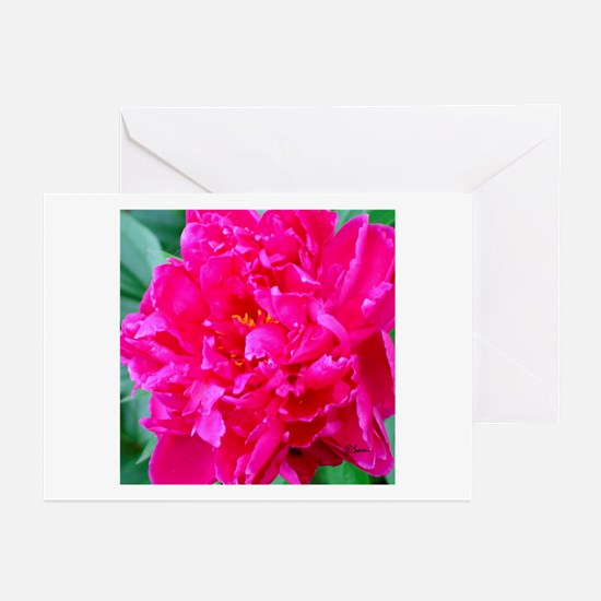 Pink Peony Greeting Cards (Pk of 10)