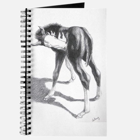 Paint foal, Got an Ich Journal