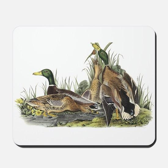 Mallard Ducks Mousepad