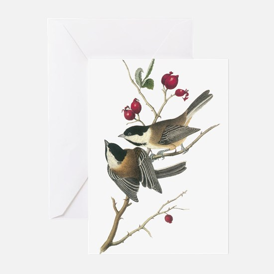Black-capped Chickadee Greeting Cards (Pk of 10)