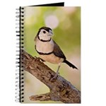 Owl Finch Journal