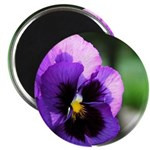 "Purple Pansy 2.25"" Magnet (100 pack)"