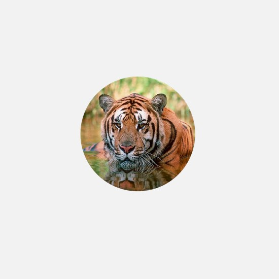 Bengal Tiger In Water Mini Button