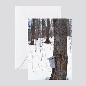 Collecting maple tree sap Greeting Cards