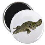 Nile Crocodile crawl Magnets