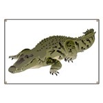 Nile Crocodile crawl Banner