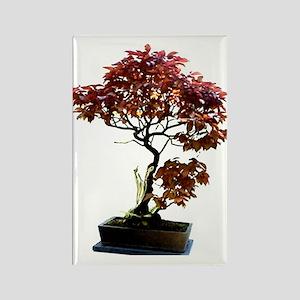 Red Leaf Bonsai Rectangle Magnet
