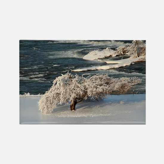 Ice Covered Winter Tree Rectangle Magnet