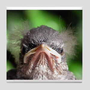 Baby Mocking Bird Tile Coaster