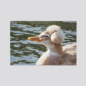 Crested Duck Rectangle Magnet
